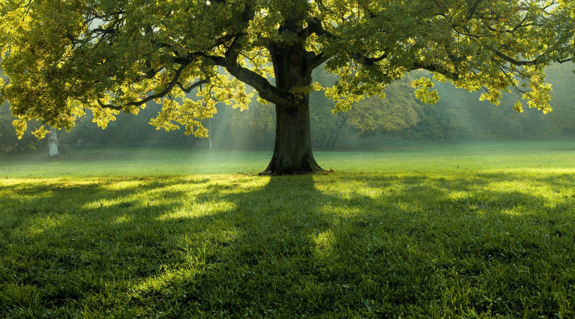 beautiful-tree-in-the-middle-of-a-field-covered-with-grass-with-the-tree-line-in-the-background-2